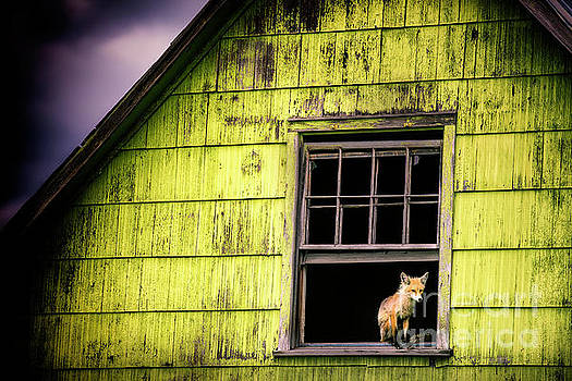 A Foxy Window by Katya Horner