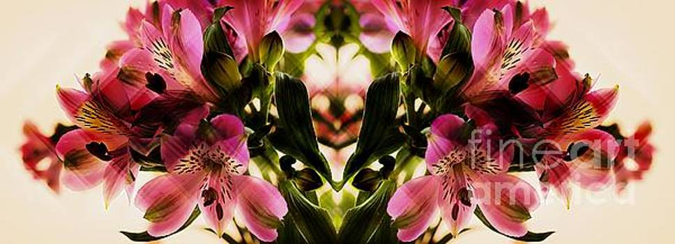 A Freesia Reflection by Clare Bevan