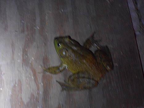 A Frog by Darlene Custer