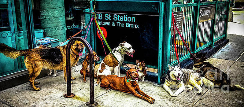 Julian Starks - A Gang of Dogs in NYC