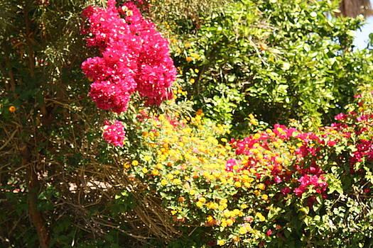 A Garden Of True Love by Sherri's - Of Palm Springs