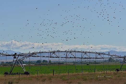 Kae Cheatham - A Gathering of Starlings