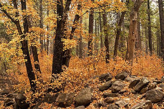 Saija Lehtonen - A Golden Autumn Forest