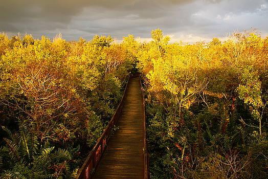 A Golden Fall by Jeffery Bennett