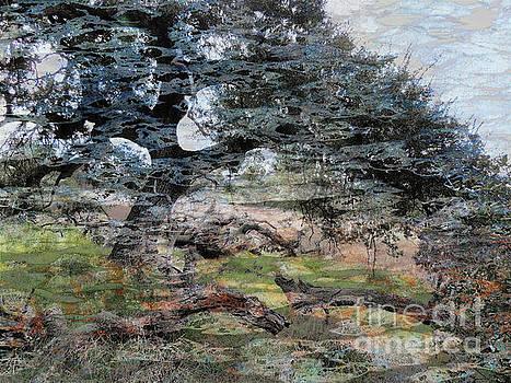 A Grand Old Oak by Robert Ball