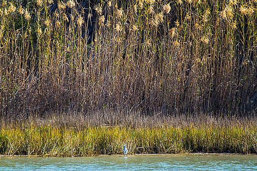 Ellie Teramoto - A Great Egret in Wilderness - Rockport Texas