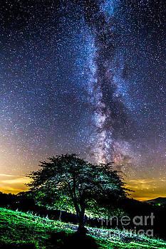 A Green Night by Robert Loe