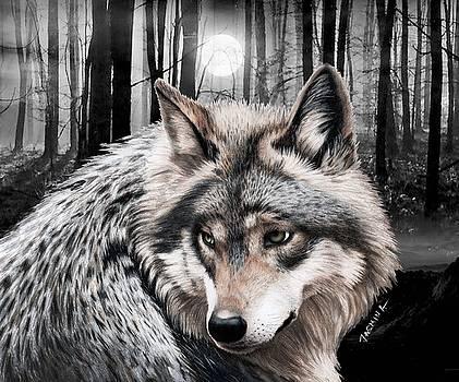 A Grey Wolf  by Jasmina Susak