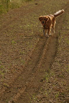 A Happy Dog in a Field by Mariajesus Soula