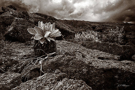Christopher Holmes - A Hard Existence - Sepia