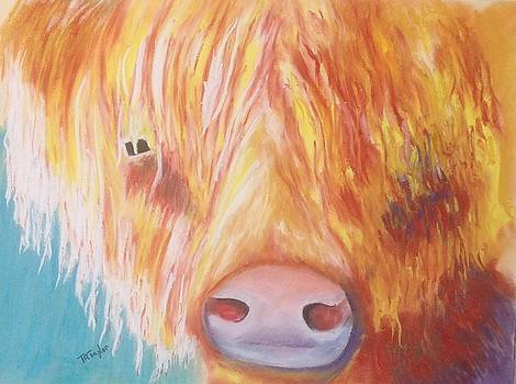A Highland Cow -The Toffee Coo by Ralph Taylor