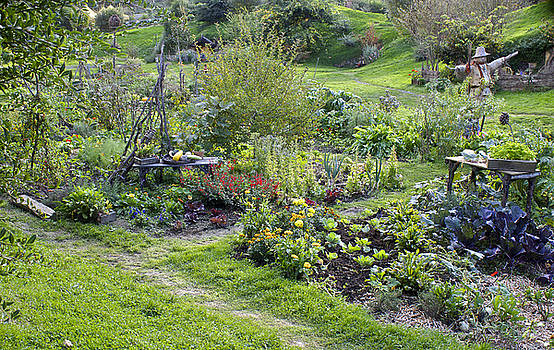 Venetia Featherstone-Witty - A Hobbit  vegetable garden