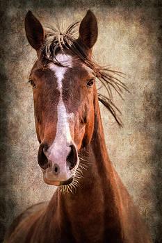 A Horse of Course by Linda Tiepelman