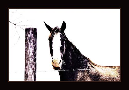 A Horse Portrait by Sherrie Conkel