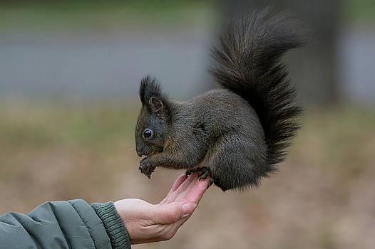 A human feeding a squirrel in a park during autumn by Julian Popov