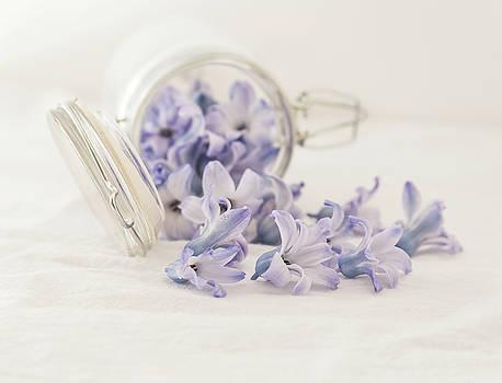 Kim Hojnacki - A Jar of Purple Sweetness