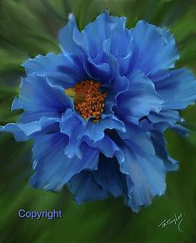 A Joy in Blue by Ralph Taylor