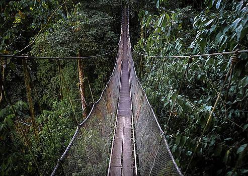 A Jungle Walk by Paki O'Meara