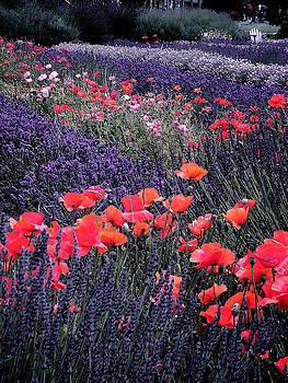 A Lavender Poppy Heaven by Delorse Lovelady