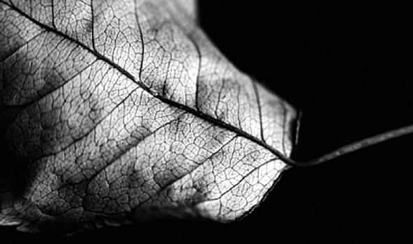 A Leaf by Lucia De Giovanni