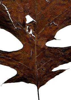 A Leaf by Paul  Simpson