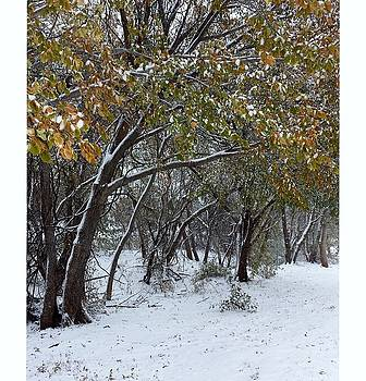 A light dusting of snow by Cathyzcreations  Cathy Randall