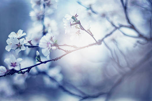 A Light exists in Spring by Angela King-Jones