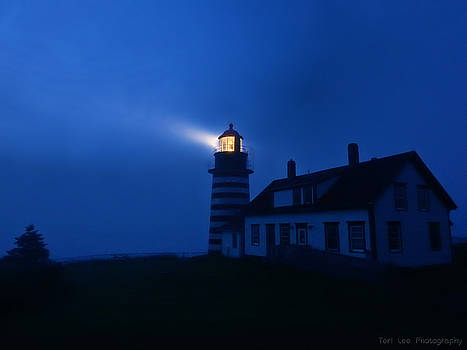 A Light in the Darkness by Teri Ridlon