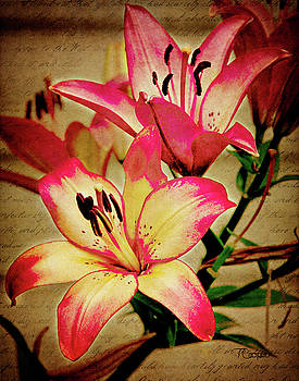 A Lily for Benjamin 2 by Tonya Cooper