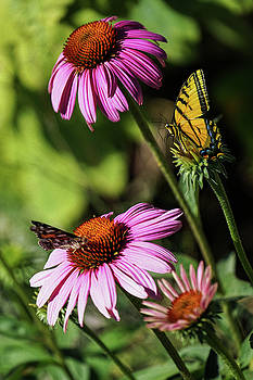 A Little Butterfly Competition by Diane Schuster