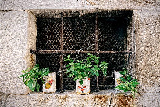 A Little Greenery for the Window by Eric  Bjerke