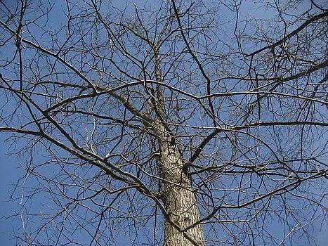 A Look Up A Tree by Jennifer  Sweet