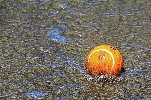 A Lost Tennis Ball At Dog Beach In Del by Randy Bayne