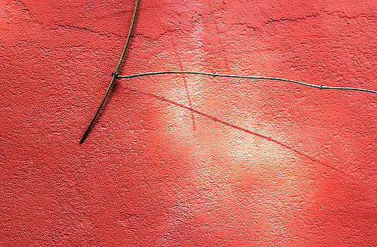 Low Hanging Twig of a Plant against a Red Wall by Prakash Ghai