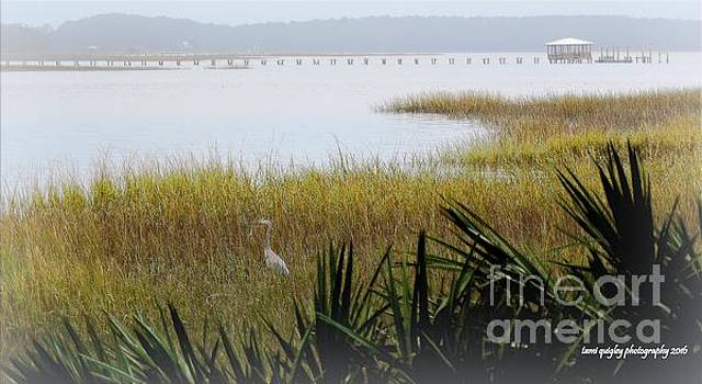 Tami Quigley - A Lowcountry Morning