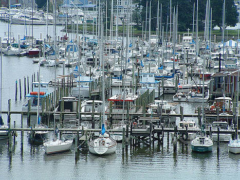 A Marina by Don Whipple