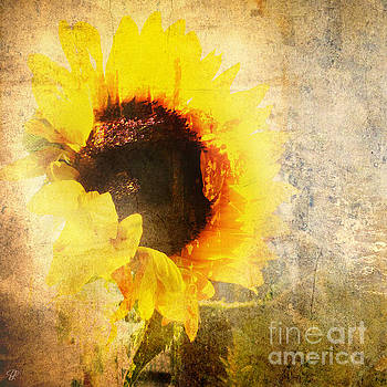 A Memory of Summer by LemonArt Photography