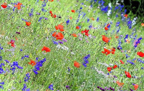 Pamela Smale Williams - A Merrie Medley in Wildflowers