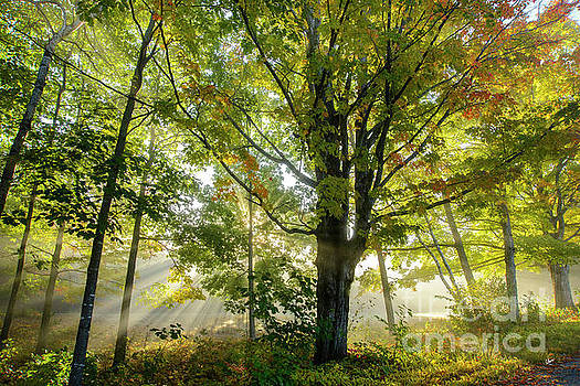 A Misty Fall Morning by Alana Ranney