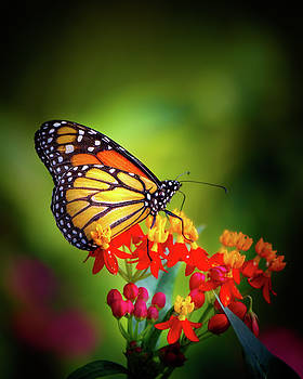 A Monarch in the Garden by Mark Andrew Thomas