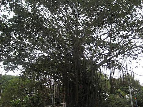 A Old Tree by Siddarth Rai