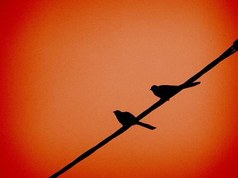 A pair of birds on a power line by Kathy Daxon