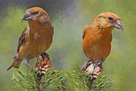 A Pair of Male Red crossbills - Painted by Ericamaxine Price