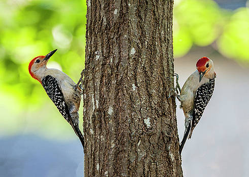 A Pair of Peckers by Cathy Kovarik