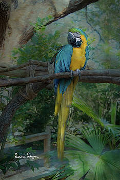 A Parrot's Life by Sandra Schiffner
