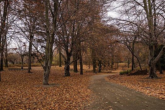 A Path Forward by Cornelis Verwaal