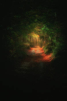 A path in the dark by Mikel Martinez de Osaba