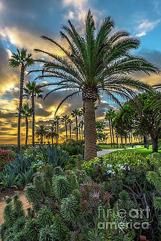 A path to paradise by Gregory Schaffer