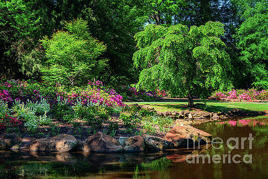 A Peaceful Feeling at the Azalea Pond by Tamyra Ayles