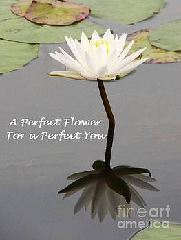 Sharon Williams Eng - A Perfect Flower Card